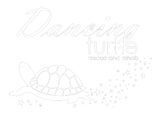 Dancing Turtle Wildlife